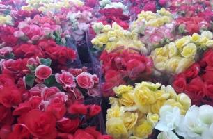 Festival de Flores de Holambra chega ao Recife no mês das mães